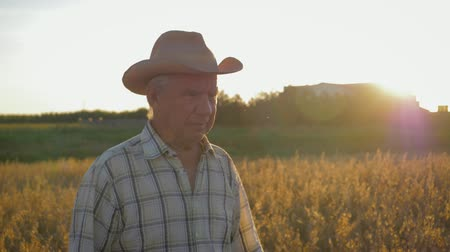 Old Caucasian Man Farmer In A Cowboy Hat Walk In A Field Of Wheat At Sunset Wideo