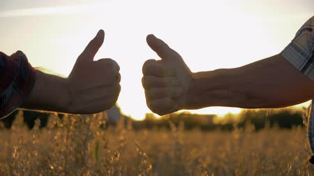 confirmed : Close Up Of Two People Show A Thumbs Up Against The Sunset In A Farm Field Stock Footage