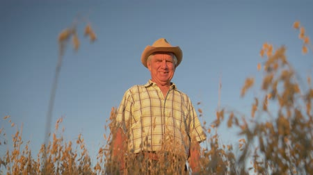 Old Farmer In A Hat Standing In Field Of Oats At Sunset
