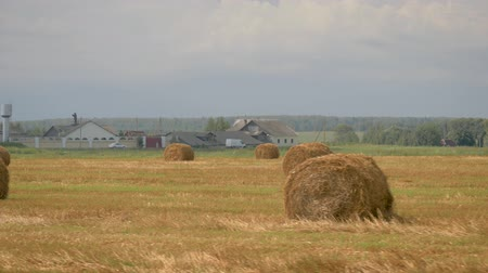 Agricultural Field With Haystacks After Harvesting Wheat On The Farm Background Wideo