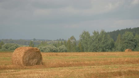 Field With Haystacks On A Hot Summer Day After Harvest In Motion Wideo
