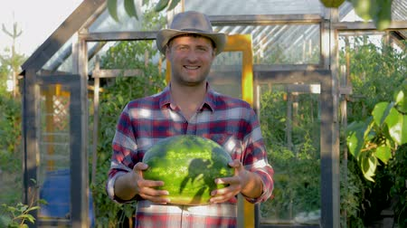 Portrait Cowboy Man In Hat Holding A Ripe Watermelon On Greenhouse Background