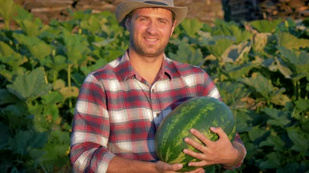 Happy Farmer Keeps Ripe Watermelon On Plantation In Ranch Wideo