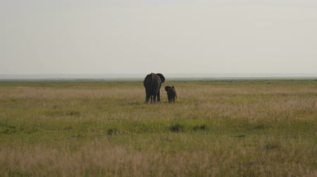 câmara : Elephant With Baby On The Plain And Dad Comes To Them