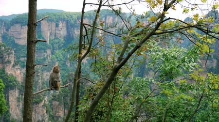 világörökség : Wild Funny Monkey Sitting On A Tree Branch In Park On A Background Of Mountains