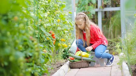 корзина : Adorable little girl collecting harvest cucumbers and tomatoes in greenhouse. Portrait of kid with red tomato in hands.