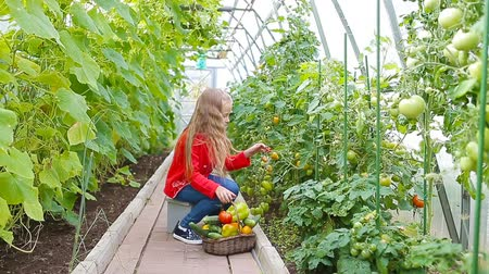 шпинат : Adorable little girl collecting crop cucumbers and tomatoes in greenhouse. Portrait of kid with red tomato in hands.