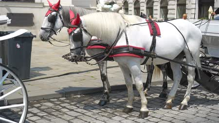 hofburg : Traditional horse  Fiaker in Vienna Austria Stock Footage