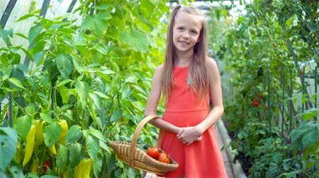 sierpien : Cute little girl collects crop cucumbers and tomatos in greenhouse
