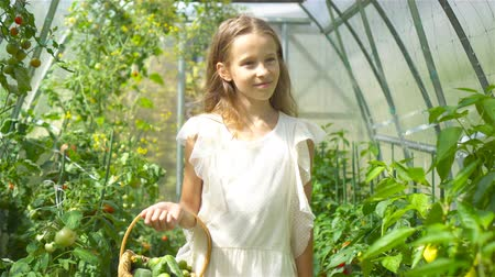 špenát : Cute little girl collects crop cucumbers and tomatos in greenhouse