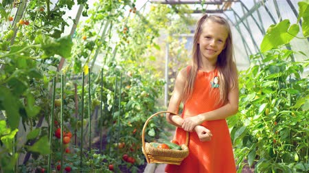 rabanete : Cute little girl collects crop cucumbers and tomatos in greenhouse