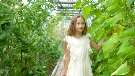 шпинат : Adorable little girl harvesting cucumbers and tomatoes in greenhouse.