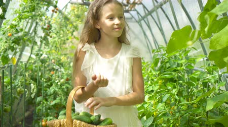 ogród : Adorable little girl harvesting cucumbers and tomatoes in greenhouse.