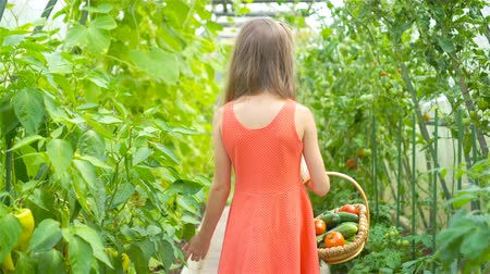 шпинат : Cute little girl collects crop cucumbers and tomatos in greenhouse