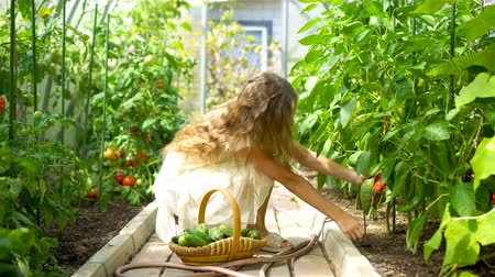 Adorable little girl harvesting cucumbers and tomatoes in greenhouse.