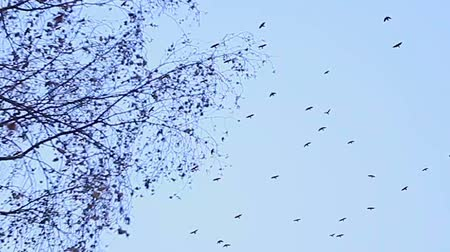 deserted : birds fly in the sky against the background of bare autumn branches of trees