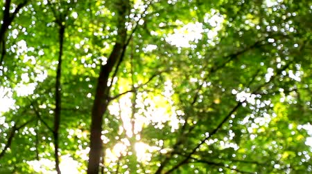 rozmazaný : Beautiful fuzzy transfusion of light through green leaves of trees. natural blurred background, Nature abstract background, nature green bokeh Dostupné videozáznamy