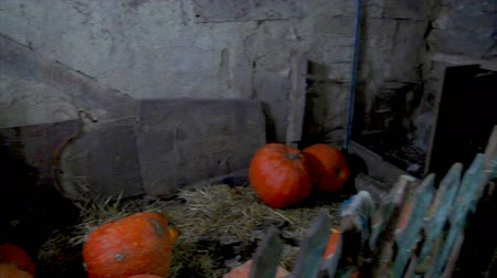 навес : Large pumpkins are in the old barn. Anticipation of a miracle Стоковые видеозаписи