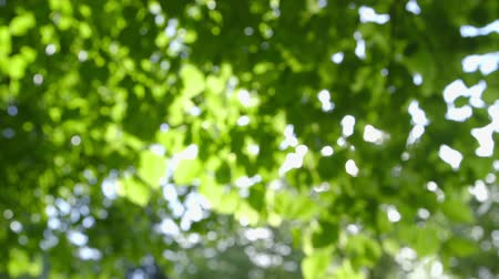optický : Abstract Fresh green leaves against the sun defocused camera pan