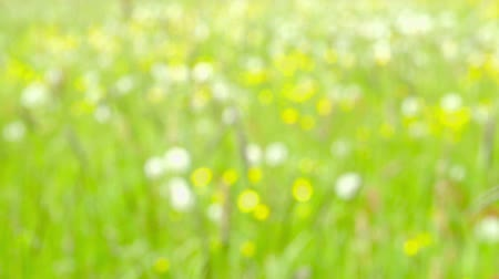 a natureza : Abstract Nature Background defocused Vídeos