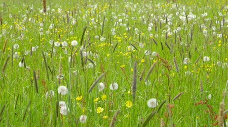 alergia : Beautiful Spring Meadow with wildflowers camera pan Wideo