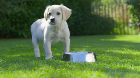 contentamento : Puppy is eating - Drinking