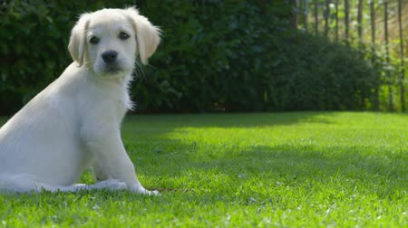 щенок : Cute Puppy in the Garden