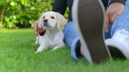contentamento : Woman is Stroking her Puppy