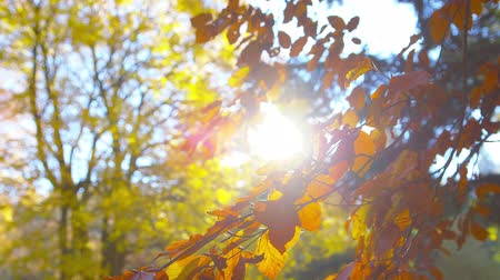 faint : Autumn - Sequence of different autumn foliage impressions - ProRes