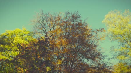 camera panning : Autumn impressions - beautiful autumn trees in sunlight - camera pan, retro look, ProRes