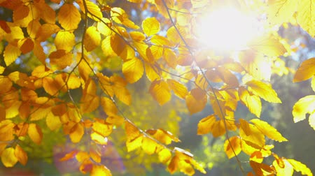 faint : Autumn Impressions - tilting camera, very low depth of field, change of focus, ProRes