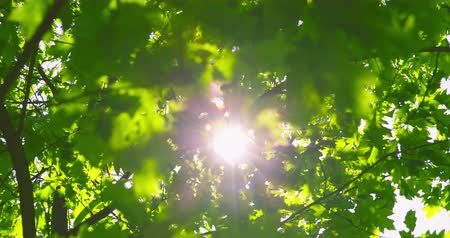 izlenim : Springtime impressions - backlit shot of beautiful foliage on a beautiful day - camera - ProRes