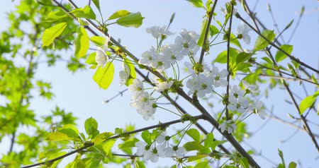 clear sky : Springtime impressions Stock Footage
