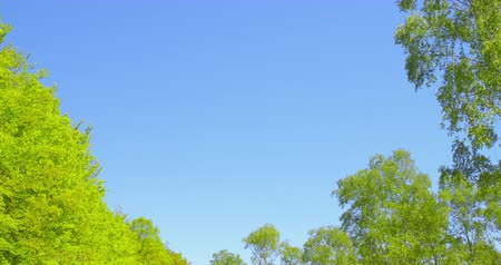 Springtime impressions - beautiful trees with lush foliage against a blue sky .
