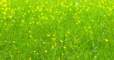 color surge : Early summer impressions - a beautiful flower meadow - ProRes