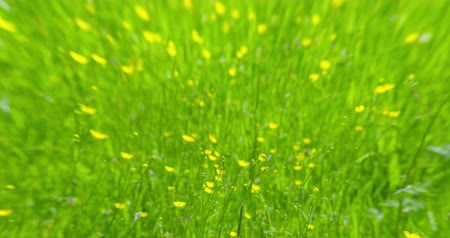 grass flowers : Vertigo - concept video - ProRes Stock Footage