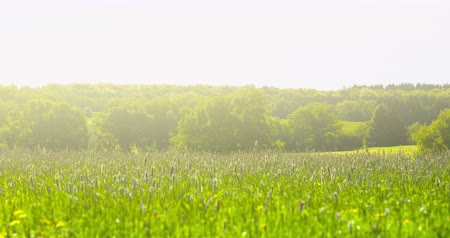 Early summer impressions - a beautiful landscape - camera pan - ProRes