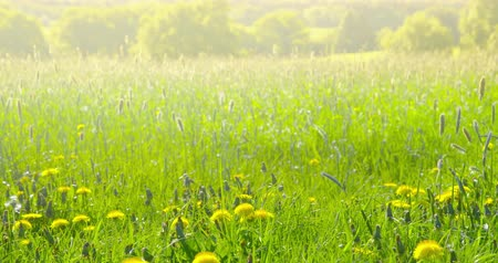 Early summer impressions - a beautiful meadow - camera pan - ProRes