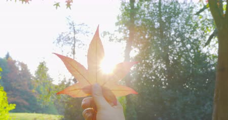 Autumn - a girl is holding a leaf against the sun, taking in the beautiful intense autumnal colors - POV shot - ProRes Vídeos