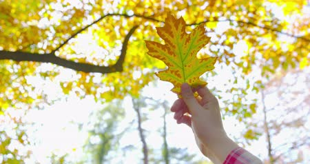 izlenim : Autumn - a girl is looking at a beautiful autumn leaf, which she just picked up - camera pan - ProRes Stok Video