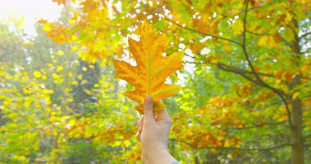 izlenim : Autumn - a girl is looking at a beautiful autumn leaf, which she just picked up - hand-held camera - ProRes