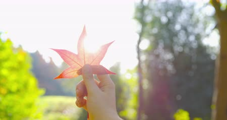 dojem : Autumn - a girl is holding a leaf against the sun, taking in the beautiful intense autumnal colors - POV shot - ProRes Dostupné videozáznamy