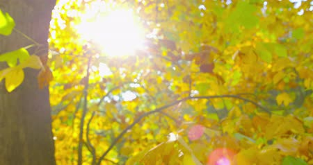 faint : Autumn Impressions - beautiful backlit autumnal foliage - completely defocused shot - handheld camera - OTS - ProRes Stock Footage