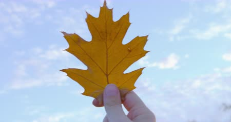 profundidade de campo rasa : Autumn - a girl is holding a beautiful autumn leaf against the sky - POV shot - hand-held camera - ProRes