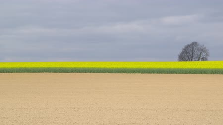 A recently plowed field in front of beautiful blooming rapeseed plants against an overcast sky - camera pan - ProRes