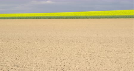 A plowed field in front of beautiful blooming rapeseed plants against an overcast sky - tilting camera - ProRes