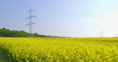 Overhead power rapeseed - camera pan - ProRes Vídeos
