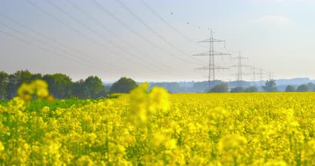 Overhead power line leading through a beautiful field of blooming rapeseed - ProRes