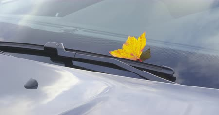 A beautiful autumn leaf, stuck under the windshield wiper of a clean car - ProRes