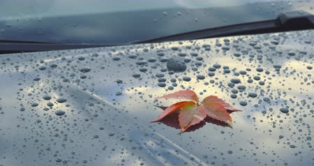A beautiful autumn leaf lying on the polished bonnet of a car - tilting and panning camera - ProRes